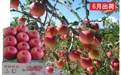 [№5898-0106]6月 冷た~い最高級ふじりんご約3kg・特選クラス