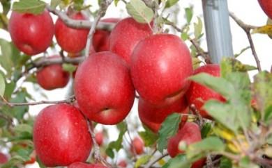 [№5764-0387]かづのりんご 「ふじ」 約10kg (ご自宅向け)【JAかづの】