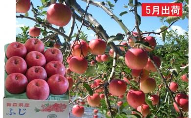 [№5898-0105]5月 冷た~い最高級ふじりんご約3kg・特選クラス