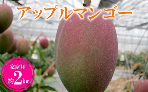 【2019年発送】農家さん直送!アップルマンゴー約2kg 家庭用