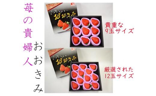 371.苺の貴婦人 おおきみ 貴重9玉&12玉サイズ 化粧箱入り