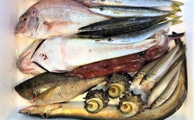 [№5562-0096]【魚千代】魚介類詰め合わせ