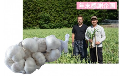 [№5761-0244]年末企画 田子産にんにく1kg(ご家庭用)農薬・化学肥料不使用