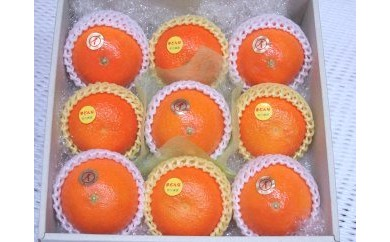 「果汁たっぷり」農家こだわりの柑橘詰合わせ 化粧箱入