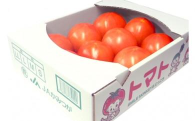 [№5840-1422]トマト【麗容】約2kg