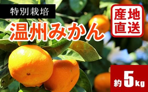 A347 【産地直送】特別栽培温州みかん