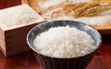 [№5810-0266]2019年産新米 コシヒカリ 10kg 無洗米