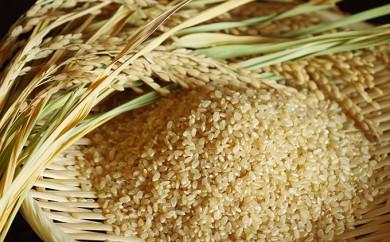 [№5810-0275]2019年産新米 コシヒカリ 30kg 玄米