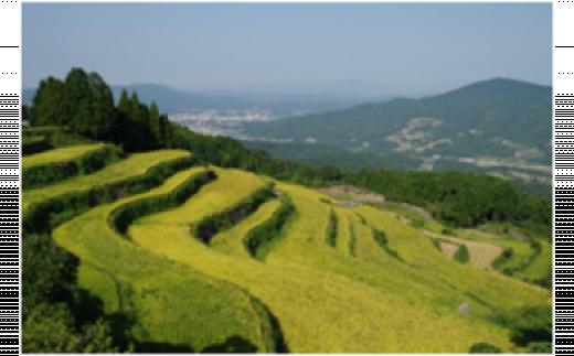 美しい岳の棚田で育まれた美味しいお米です