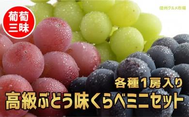 [№5657-2277]☆先行予約 葡萄三昧 高級ぶどう味くらべミニセット(3種各1房)