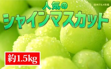 [№5657-2260]☆先行予約【新鮮果実】人気のシャインマスカット 約1.5kg