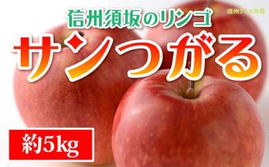 [№5657-2279]☆先行予約【信州須坂のりんご】サンつがる≪秀品≫約5kg