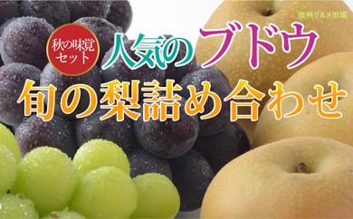 [№5657-2273]☆先行予約【秋の味覚セット】人気のブドウ2種&旬の梨の詰合せ