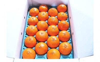 [№4631-1603]柑橘の大トロ!せとか 約5kg