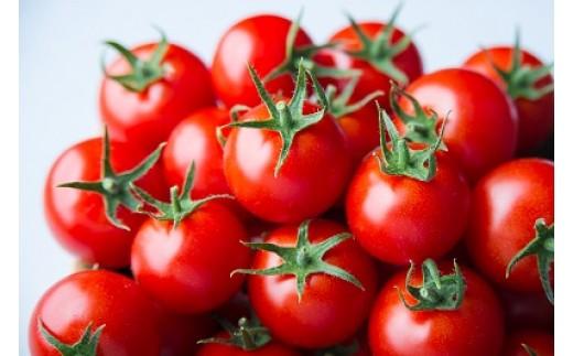 A088:出雲の最高級トマト、トマトを超えた「超トマト」1kg