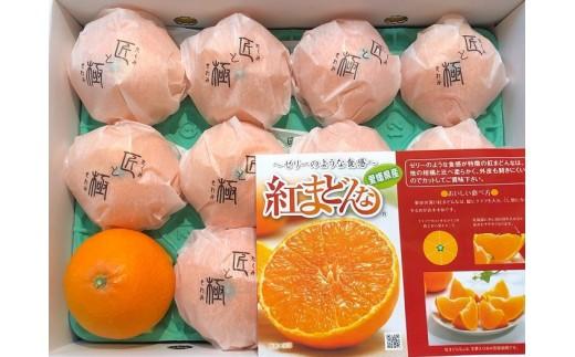 D-47.【高級柑橘】特選紅まどんな糖度13度化粧箱入り