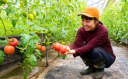 大崎上島の『めぐみ農園』で育った大玉トマト