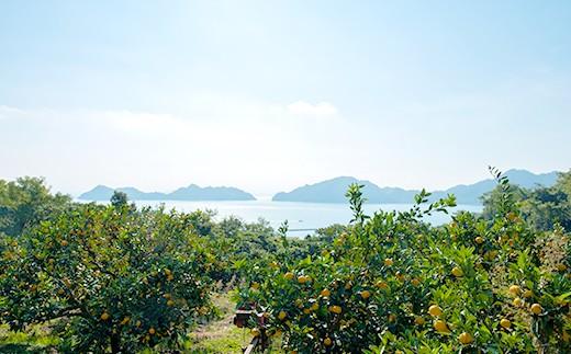 大崎上島町の岩﨑農園で育ちました