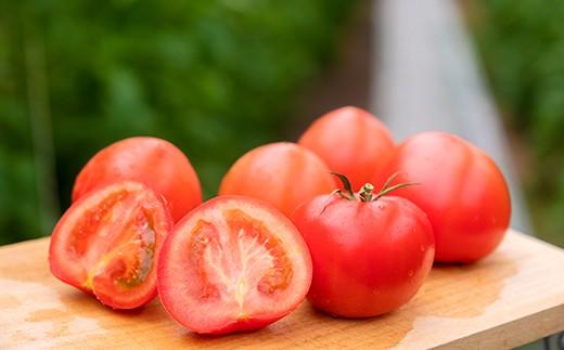 つやつや、プリプリ、香りも濃い。まさに「トマト」なトマトが約1kg