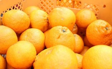 [№5772-0197]★農薬・化学肥料未使用★不知火(デコポン)5kg