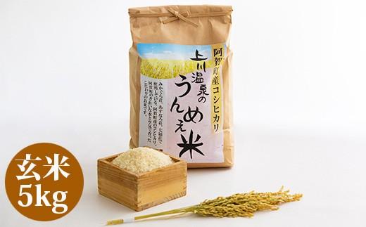 阿賀町上川産コシヒカリ 上川温泉のうんめぇ米 玄米5kg