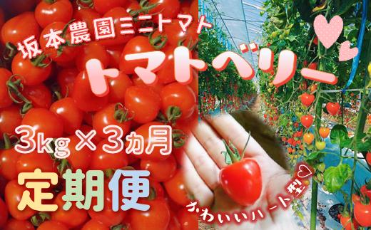 X2 【定期便】坂本農園のミニトマト・トマトベリー(3kg×3か月)