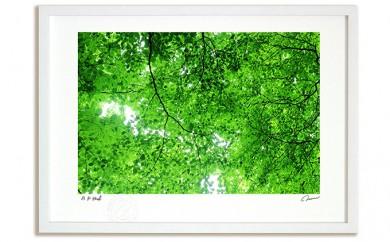 [№5672-0245]絵画のような質感《アートフォト》木漏れ日2014