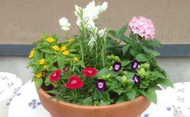 [№5862-1018]エディブルフラワー(食用花)寄せ植え