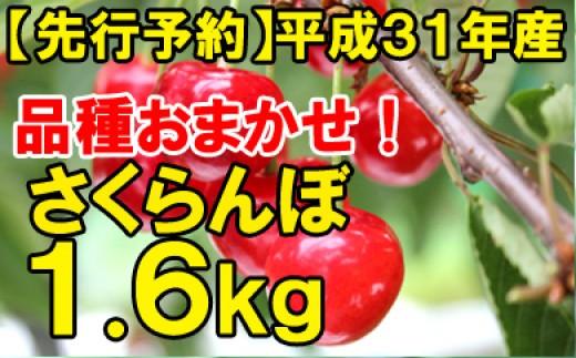 【先行予約】平成31年産さくらんぼ品種おまかせ(ご自宅用)約1.6kg