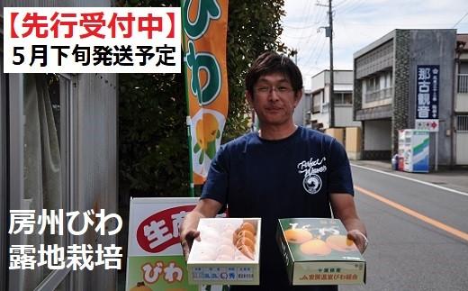【010-050】5月下旬より発送 「房州びわ」露地栽培 Lサイズ15粒