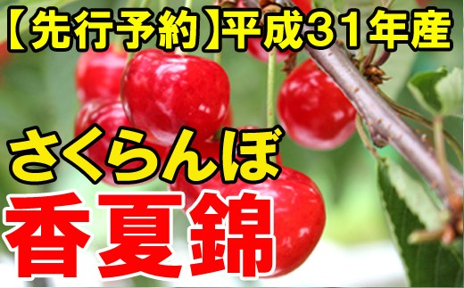 【先行予約】平成31年産さくらんぼ(香夏錦)約1kg