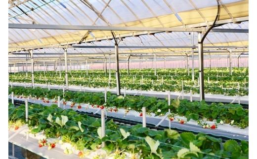 化学合成された農薬及び肥料の使用は福岡県基準の半分以下に抑え、その分手間をかけ、大切に育てています