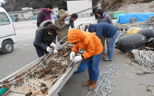 牡蠣の養殖体験