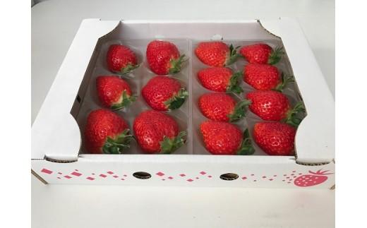 初めて市場に出回る大変貴重な「特別栽培 恋みのり」を、イチゴ輸送に最も適した特別な包装器「ゆりかーご」にてお届けいたします。