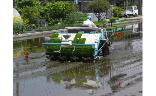 植えられた稲は生産者の皆さんの愛情と豊かな水をもらい、すくすくと生長していきます♪