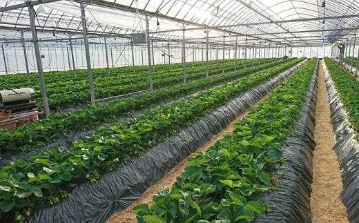 自家製の有機質肥料を使い、徹底した土づくりを行う、こだわりの土耕栽培