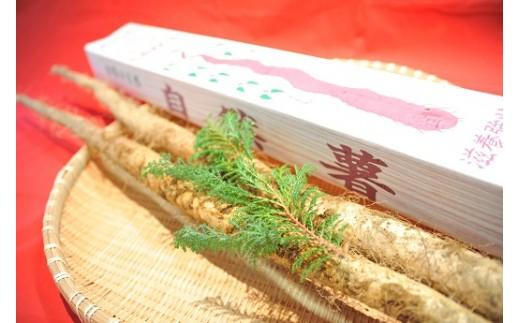 B0-3713【数量限定】南小国からの贈り物「自然薯」約1.5kg