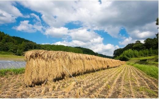手間暇がかかる「掛け干し米」にもあえて挑戦。じっくり太陽の光を浴びて育った米は旨味と甘みが「ギューっ」と詰まっています♪