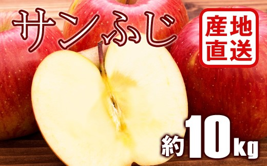 B784 【産地直送】サンふじりんご 約10kg