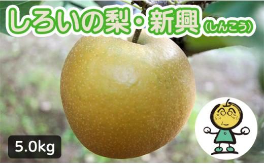 【先行受付】しろいの梨 新興 5kg