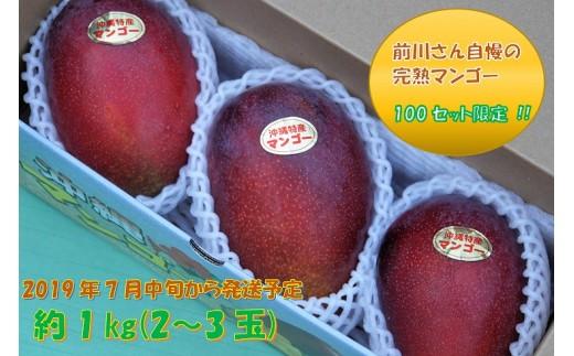 【100セット限定】前川さん自慢の完熟マンゴー約1kg(2~3玉)【2019年発送】
