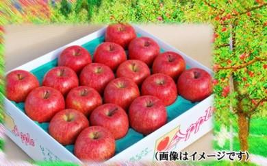 りんご ふじ 18玉~20玉