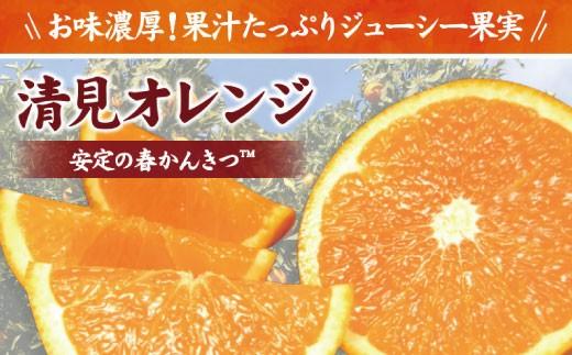 清見オレンジ 約5kg サイズおまかせ 紀伊国屋文左衛門本舗【予約受付/2月下旬以降発送】