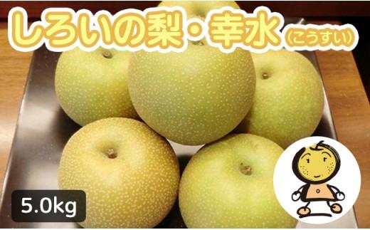 【先行受付】しろいの梨 幸水 5kg