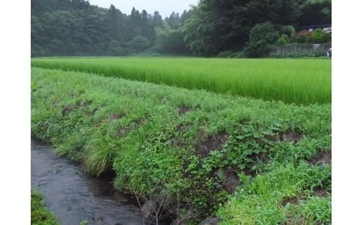 ホタルが生息する小川と棚田の様子です。