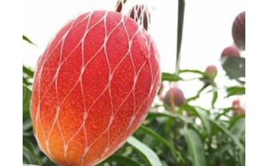 南国の恵み 完熟マンゴー(家庭用)