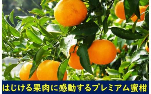 荒木農園のはるみ4kg〃弾ける果肉に感動のプレミアム蜜柑
