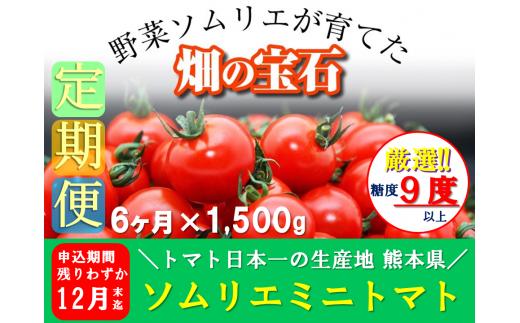 G5 【定期便】熊本県玉名産ソムリエトマト(ミニトマト1.5kg×6か月)