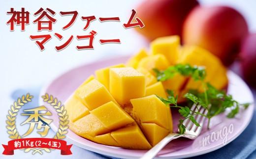 【2019年発送】神谷ファームのマンゴー(秀)約1Kg(2~4玉)