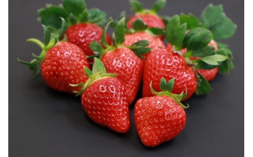 A1201 花田さんちのこだわり花福いちご~贅沢4品種食べ比べセット~